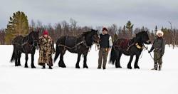 LÖ Tre stamhästar__ARG8661_WEBB_Foto AnnaReet Gillblad.jpg