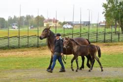 Hästparad2.jpg