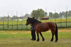 Hästparad3.jpg