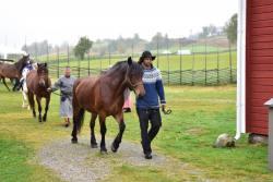 Hästparad12.jpg